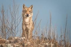 vlk-obecny-2019-01-21-FB-01