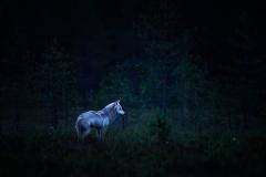 vlk-obecny-2019-07-08-FB-01