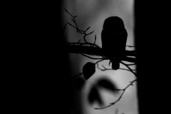 kulisek-nejmensi-2016-11-23-WB-FB-01